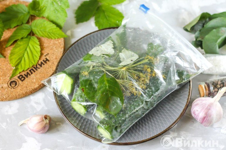 Закладка огурцов с укропом и листьями в пакет